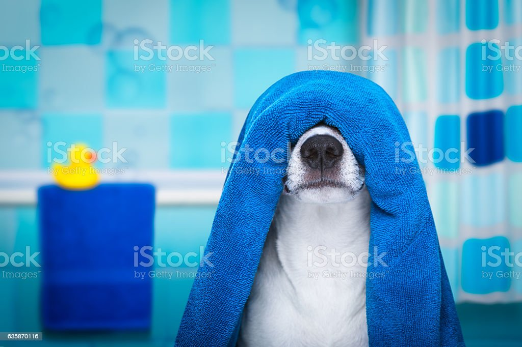 dog in shower  or wellness spa stock photo