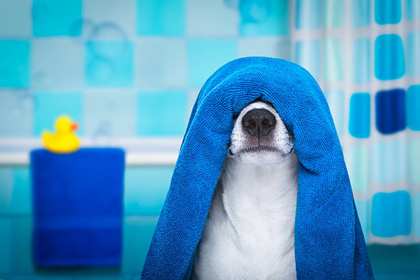 dog in shower  or wellness spa - Photo