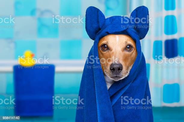 Dog in shower or wellness spa picture id938414140?b=1&k=6&m=938414140&s=612x612&h=evkpresw3xqpjsldbngmrj dxvmzxeybpcvhclkohsa=