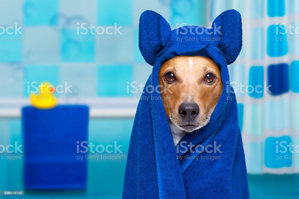 Hund in Dusche oder Wellness spa – Foto