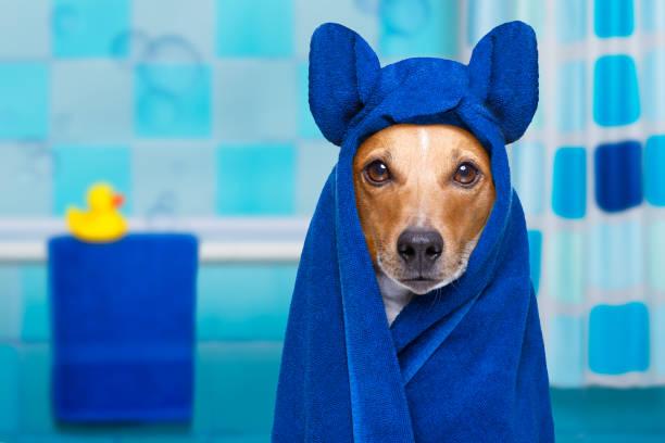 cão no chuveiro ou wellness spa - foto de acervo
