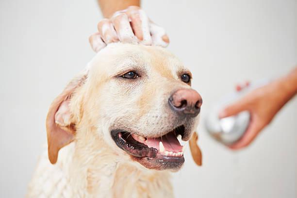 Dog in shower picture id464939611?b=1&k=6&m=464939611&s=612x612&w=0&h=ahxtuereamyq2xdg cbckadksynwc 9ntugypw6otpm=