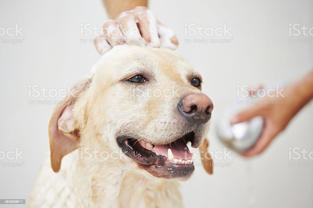 Hund in Dusche – Foto