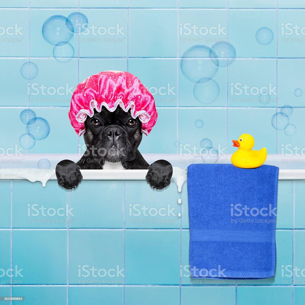 Chien dans la douche - Photo