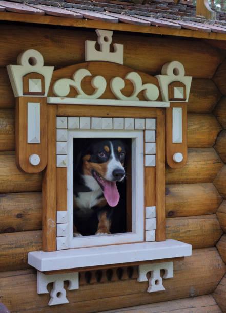 Hund in kleinen Holzhaus. – Foto
