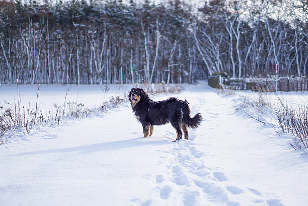 Dog in snow stock photo
