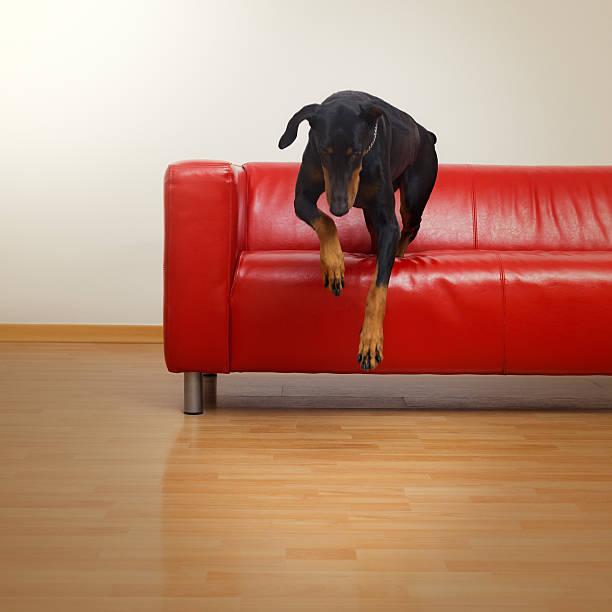 Dog in sofa picture id170117267?b=1&k=6&m=170117267&s=612x612&w=0&h=ylivjqmh7ebq jmwikrx8ebrnxnq9ypn0lpxe mbe74=