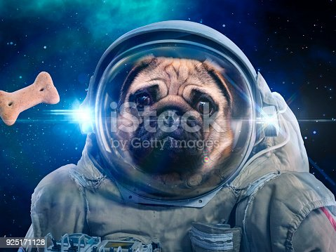 istock Dog in space suit hunts dog food, hunt 925171128