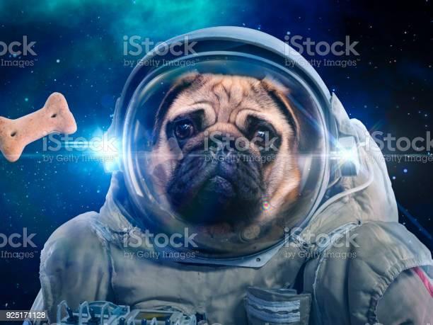 Dog in space suit hunts dog food hunt picture id925171128?b=1&k=6&m=925171128&s=612x612&h=iesnxn 9ki4c6u xe18eqfphp47os4hbjvyycy76u6a=