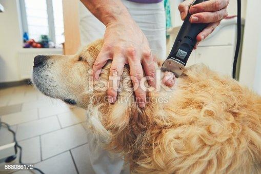 istock Dog in the animal hospital 868086172