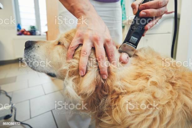 Dog in the animal hospital picture id868086172?b=1&k=6&m=868086172&s=612x612&h=uukzca5uxhih35jxwrlmp xcljch0fcerfpprnkmkoe=