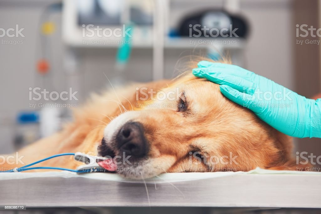 Dog in the animal hospital stock photo