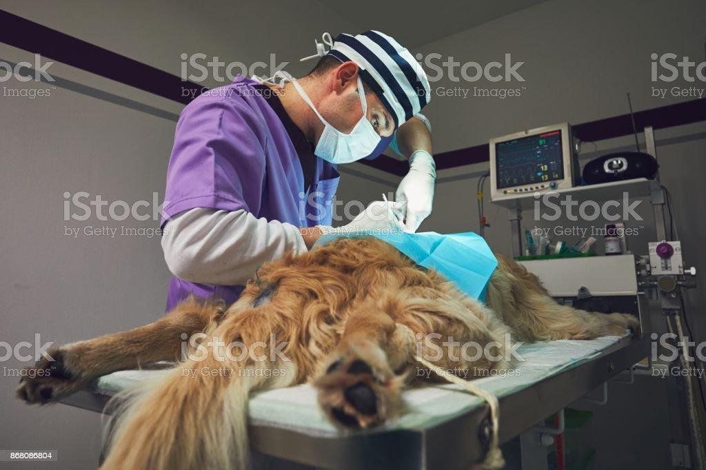 Dog in the animal hospital stock photo