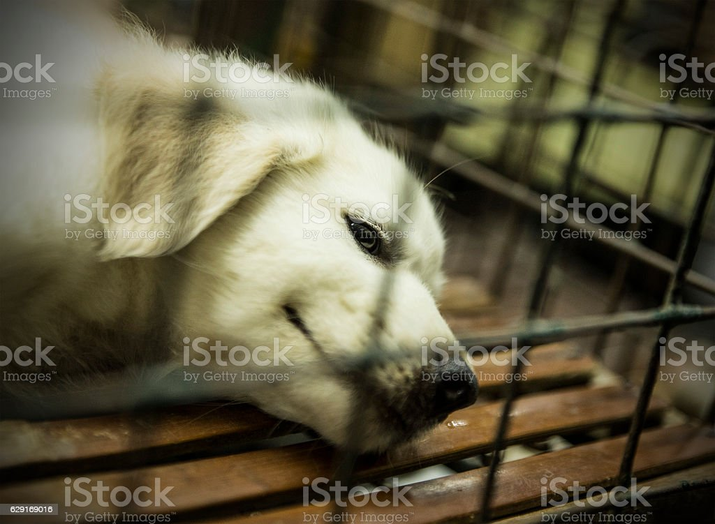 dog in the animal market-manila stock photo