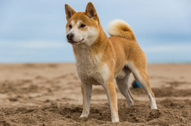 A dog in the beach stock photo