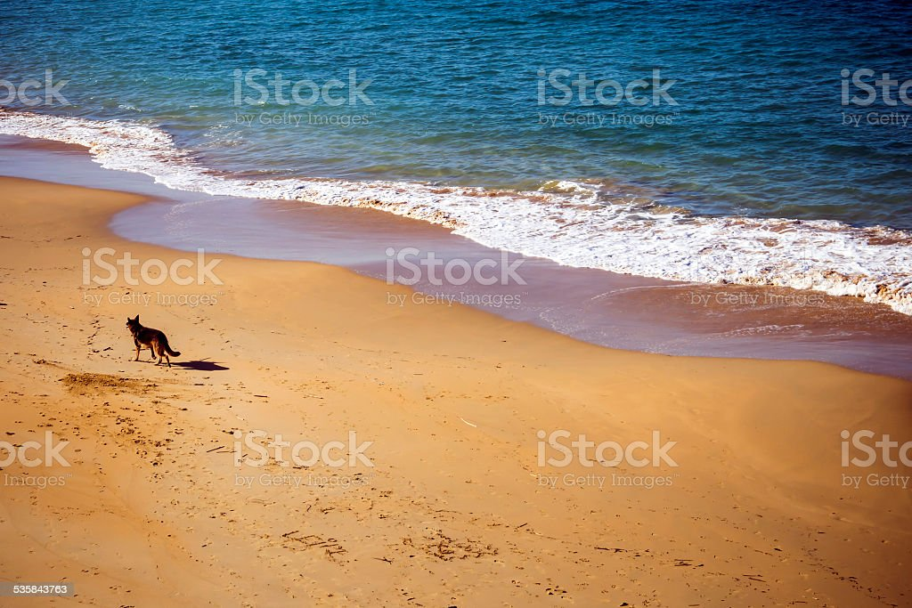 Dog in the beach stock photo