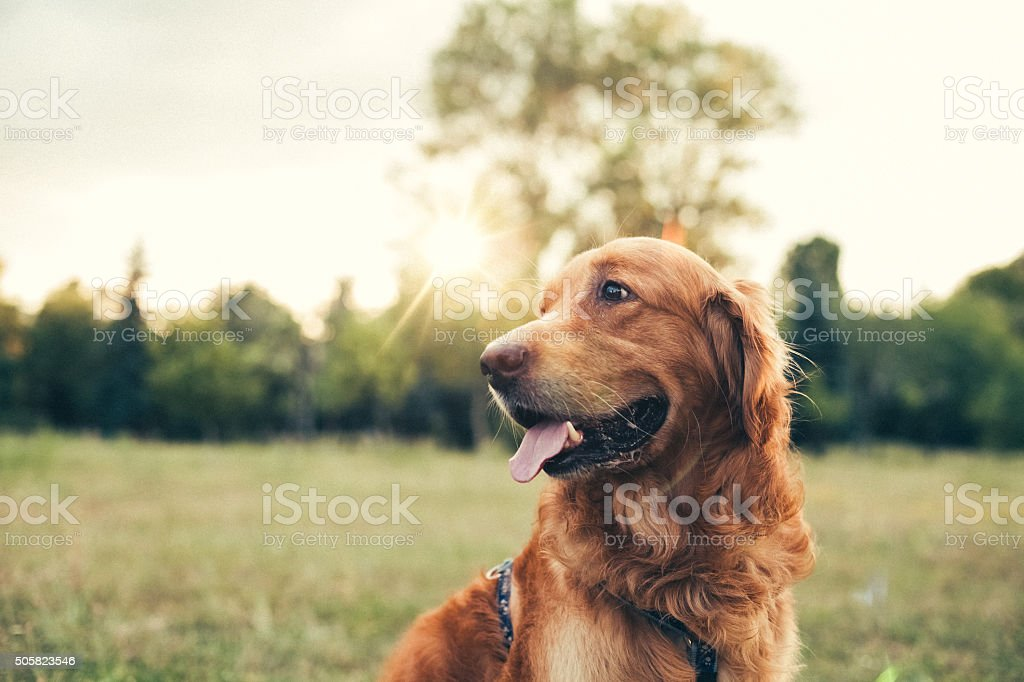 Cane nel city park - foto stock
