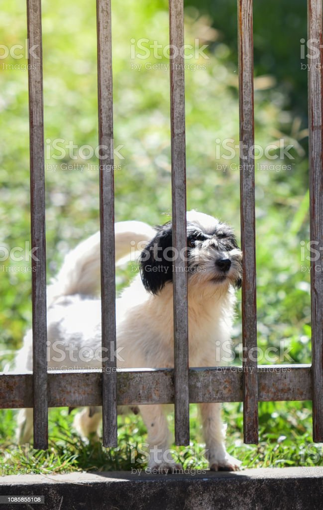 Dog in the fence / The dog looking outside waiting for the owne in...