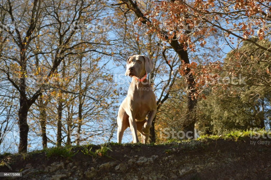 Dog in the forest royalty-free stock photo