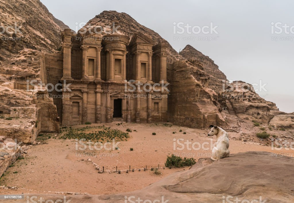 Dog in the Navateans kingdom, Jordan stock photo