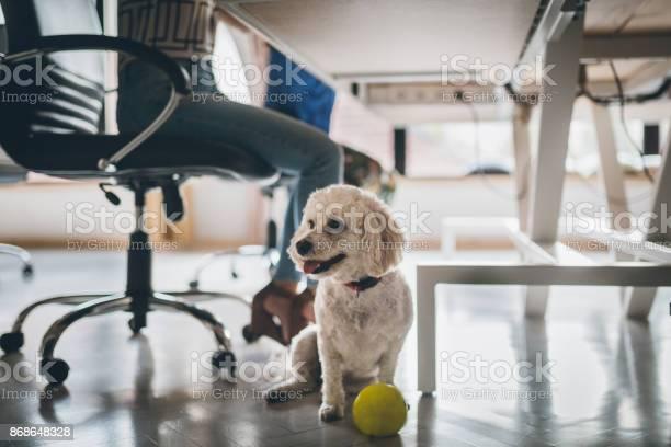 Dog in the office picture id868648328?b=1&k=6&m=868648328&s=612x612&h= eb49t2ssz1wfcfy xtaqw32gg0bbozls1slogypqsg=
