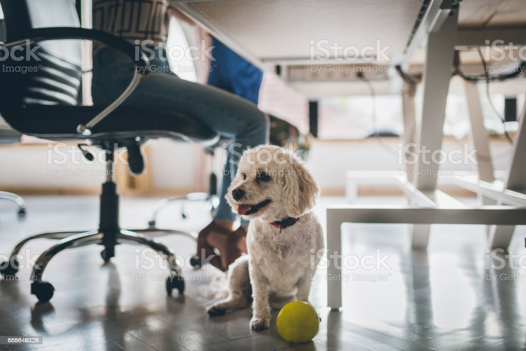 Hund im Büro – Foto