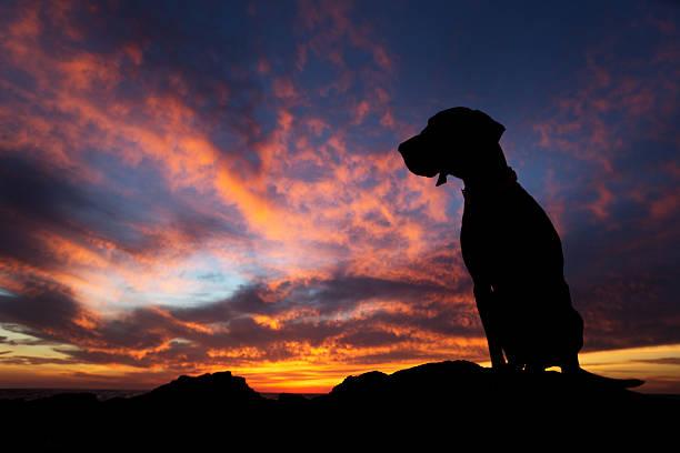 Dog in the sunset picture id516349739?b=1&k=6&m=516349739&s=612x612&w=0&h=r9k3i4nbjddds ei6iqqpsepsp9t7n eknhtj4alsze=