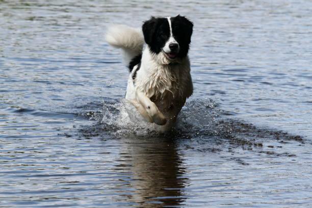 Dog in the water picture id1141405610?b=1&k=6&m=1141405610&s=612x612&w=0&h=by71osfyyyk1d1tsmerdoujphdxbei3vaavipgupp0m=