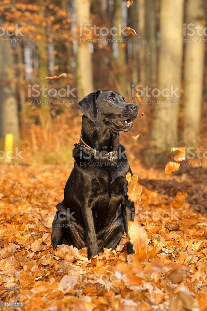 Hund im Wald – Foto