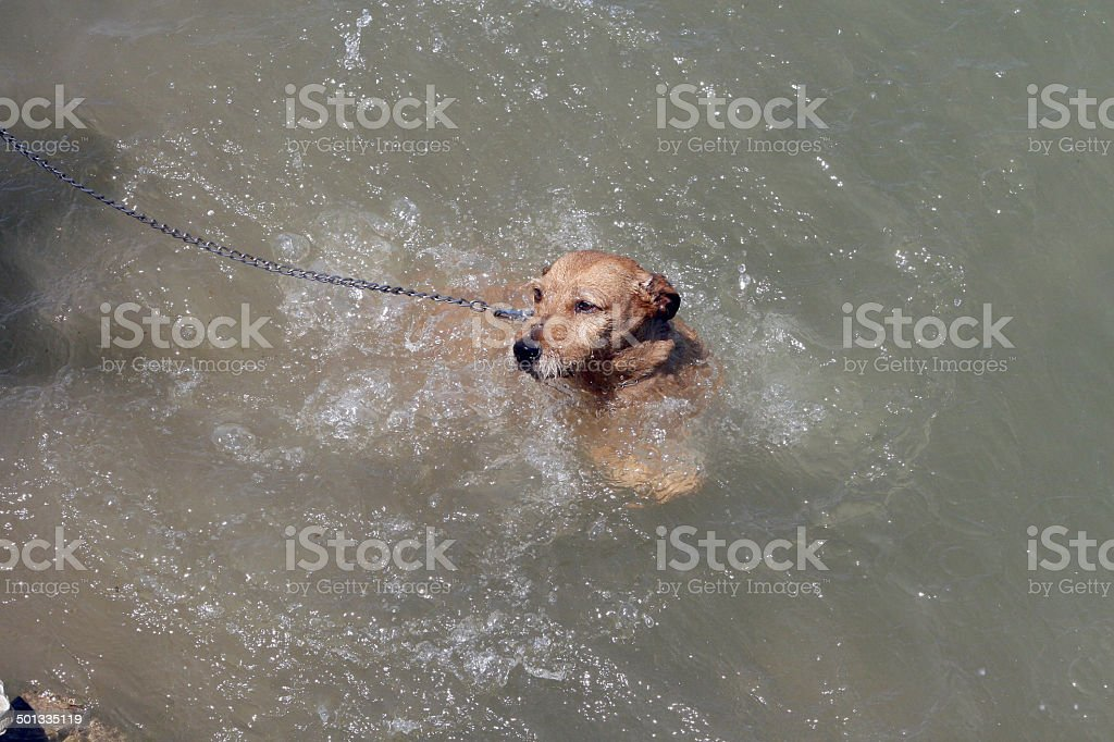 Dog in the wother stock photo