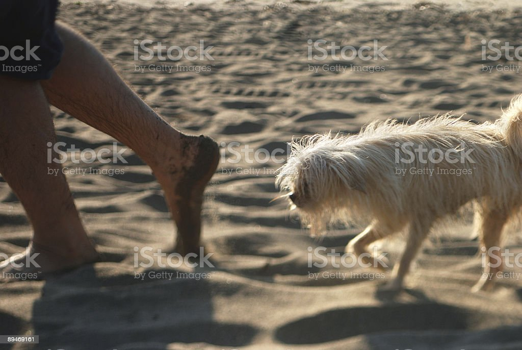 Dog in toe royalty-free stock photo