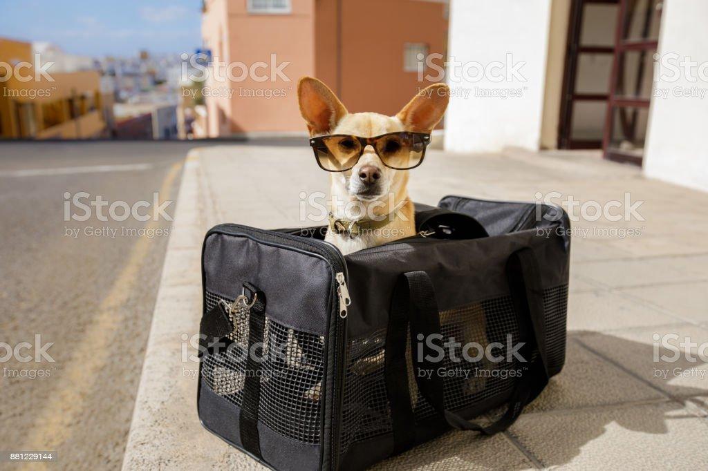 Hund Transportbox oder Tasche bereit zu reisen – Foto