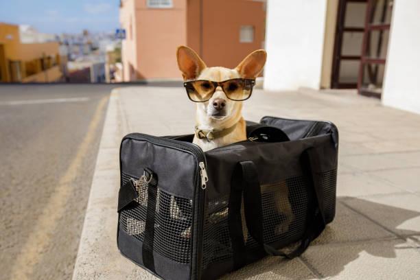 hund transportbox oder tasche bereit zu reisen - hunde träger stock-fotos und bilder