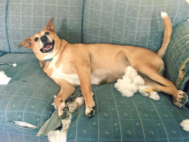 hund in not - anti unordnung stock-fotos und bilder