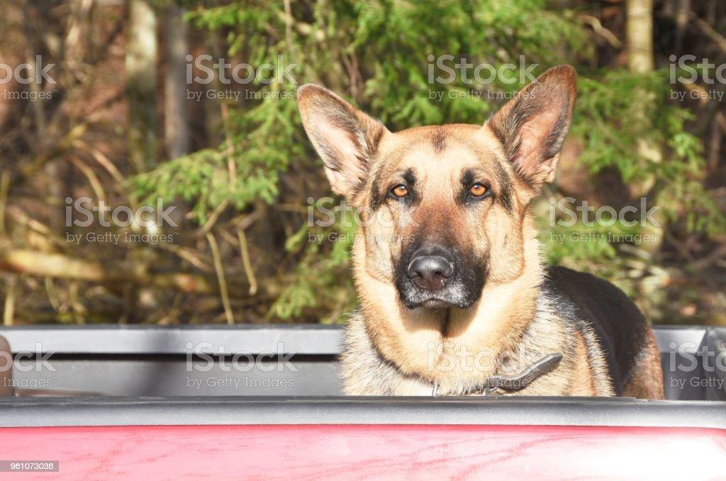 Hund im LKW – Foto