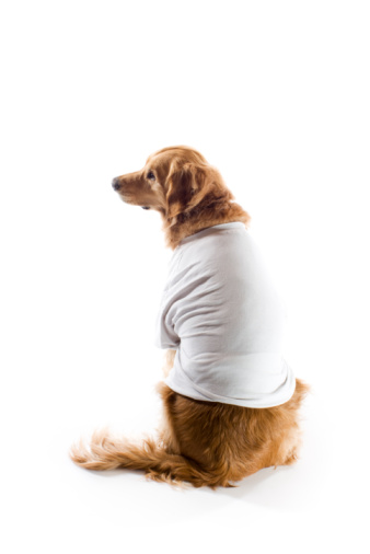 Dog In TShirt Isolated on White