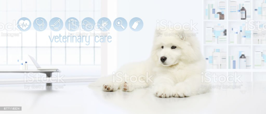 dog in vet clinic with veterinary care icons, veterinarian examination concept web banner stock photo