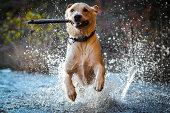Blake loves playing fetch at the lake!