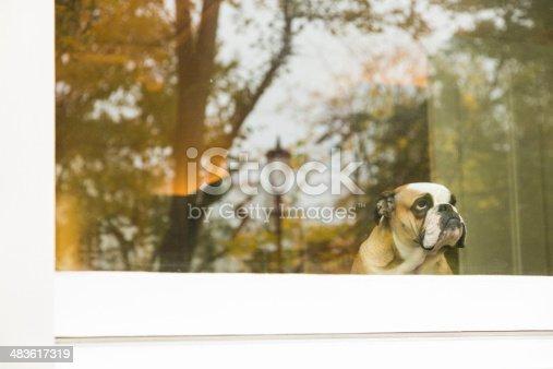 istock Dog in window 483617319