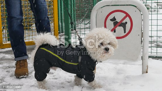 istock Dog in winter jacket stands with his owner in front of the sign No dogs allowed during the snowy winter. 1185922393