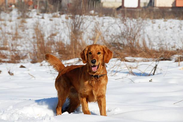Dog in winter park picture id454982531?b=1&k=6&m=454982531&s=612x612&w=0&h=w4mgkf93l nm2yrsary9veyvndsqp0 duu6iu 91y8s=