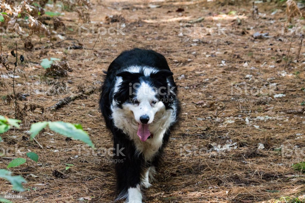 dog in woods stock photo
