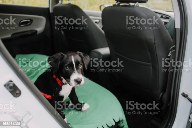 Dog inside a car picture id966281258?b=1&k=6&m=966281258&s=612x612&h=vf7e9  1amdltybeijbwhskx5pzrzrmv7utev728lv4=