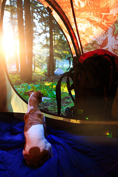 Best Pup Tent Stock Photos, Pictures & Royalty-Free Images