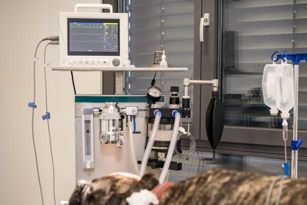 Hund intubiert im Operationssaal der Tierklinik – Foto
