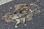 Dog is crushed by car, its remains lie on roadside.