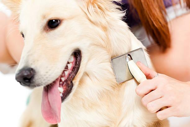 Dog is having treatment by a vet picture id175449299?b=1&k=6&m=175449299&s=612x612&w=0&h=mmfrabuafcxmvdpto69o1ajvqdpchi4tugtzboe45um=