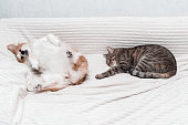 istock dog is lying on the bed on his back. Next to sleep a cat. Concept cat and dog 1254192049