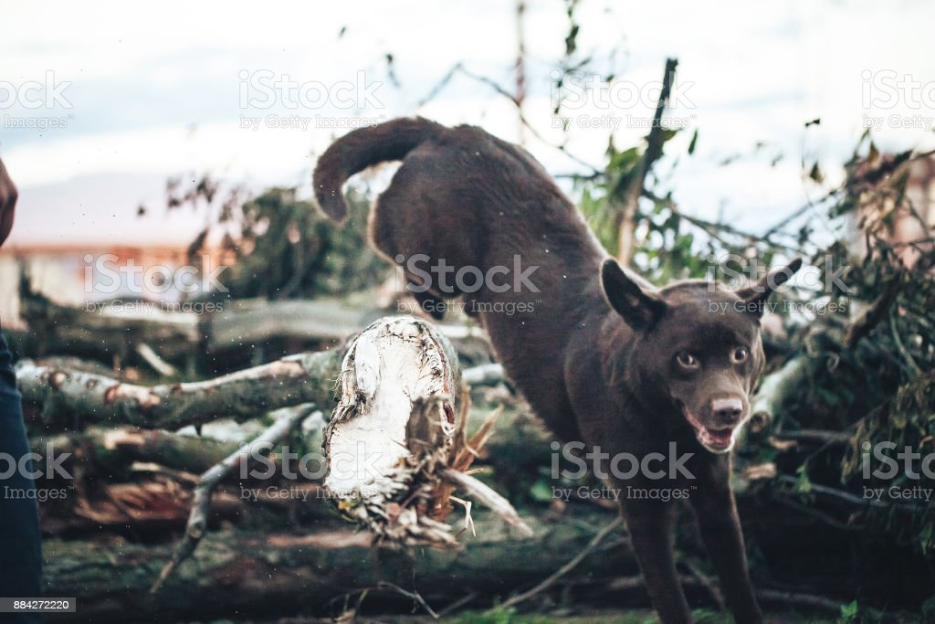 Dog is Playing Outdoors and Jumping over a Tree Trunk stock photo