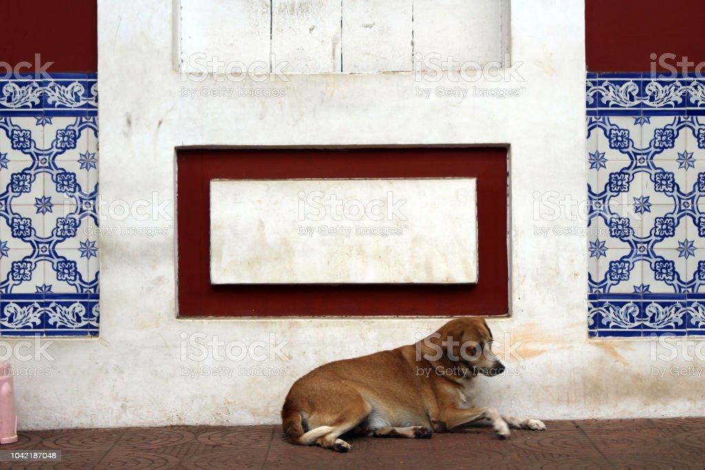 Un perro es relajante alrededor de la puerta en el casco antiguo de Goa. - foto de stock